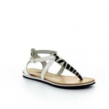 gemma zebra white